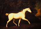 Lord Westmoreland's hunter by George Stubbs RA